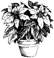 PI Pot de Poinsettias